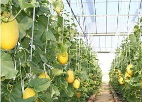 托古乡长德棚室园区 成特色经济种植示范区